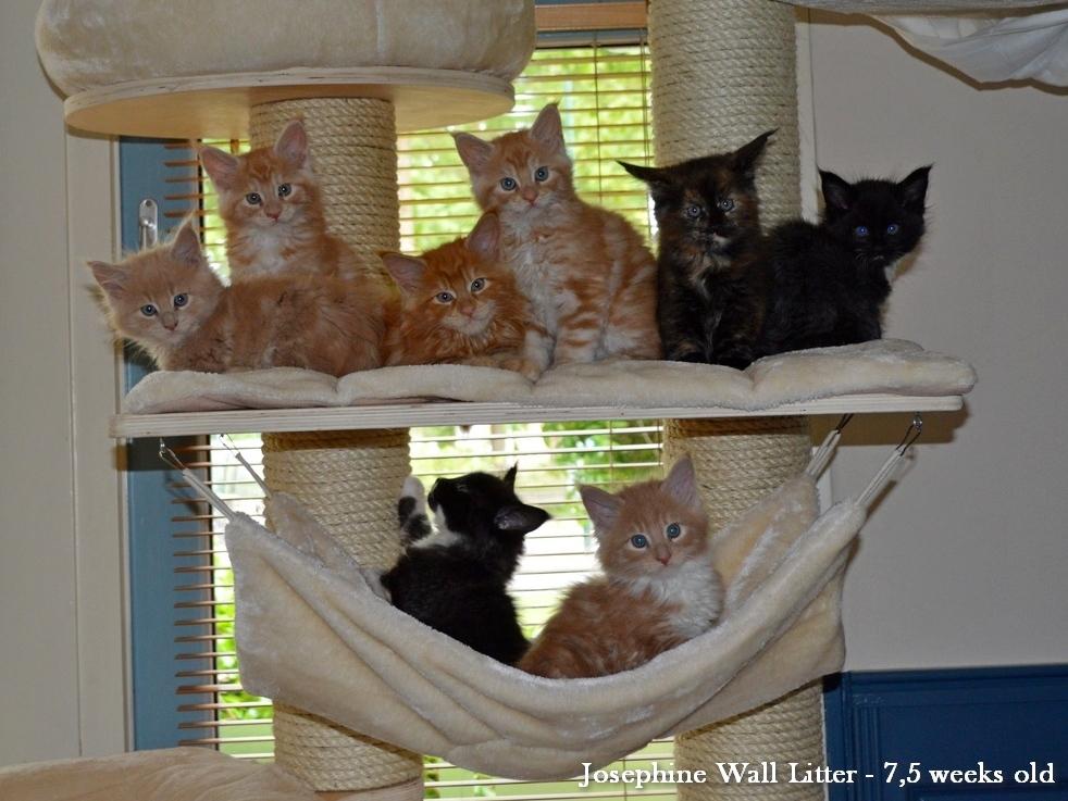 JW nest 8 weken 2