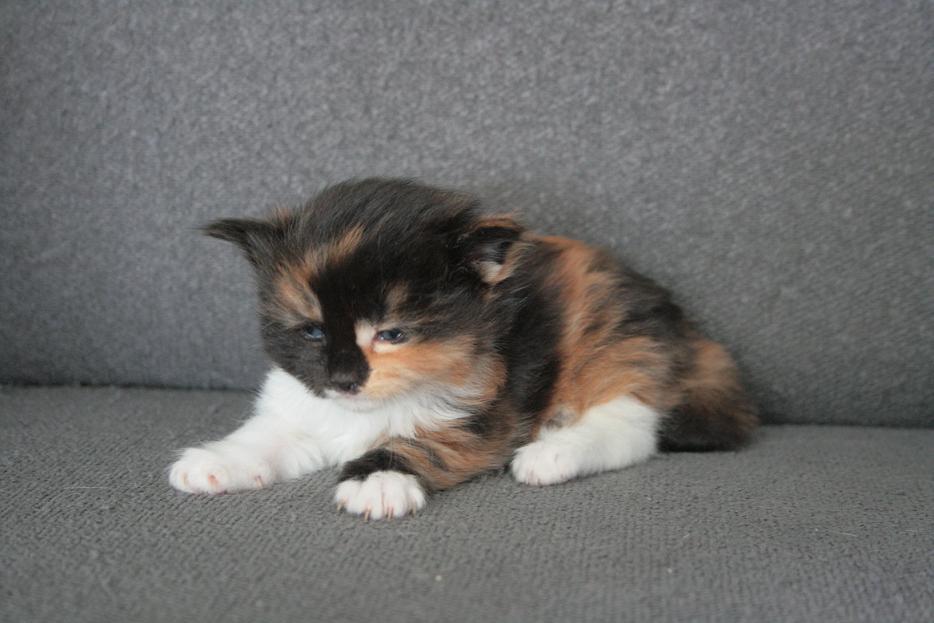 Lena 14 weken