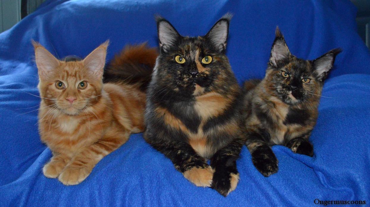 Sarah, Caty, Maggy