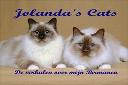 banner jolandas cats klein