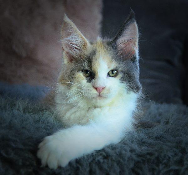 babet-11-week-oud